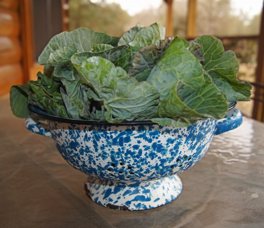 When eaten raw collard greens are tough and bitter, but when boiled and simmered Southern-style, these greens are delicious!